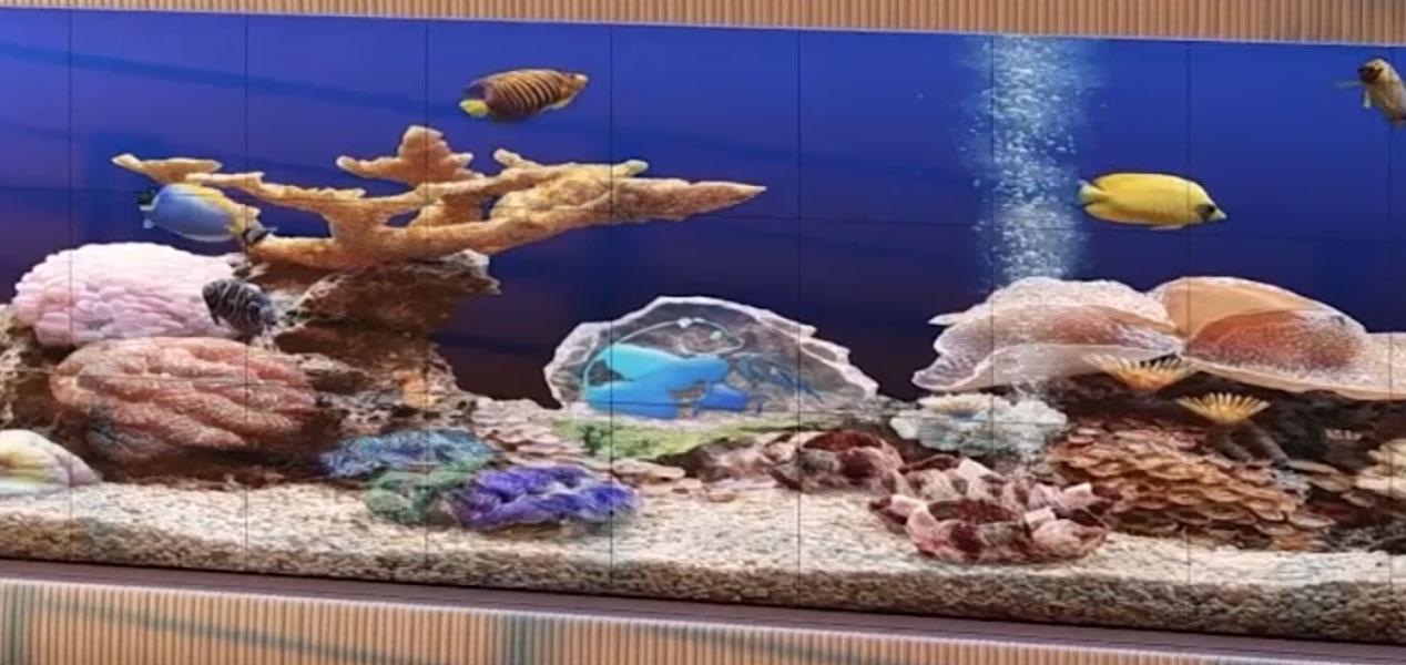 Virtual acquarium