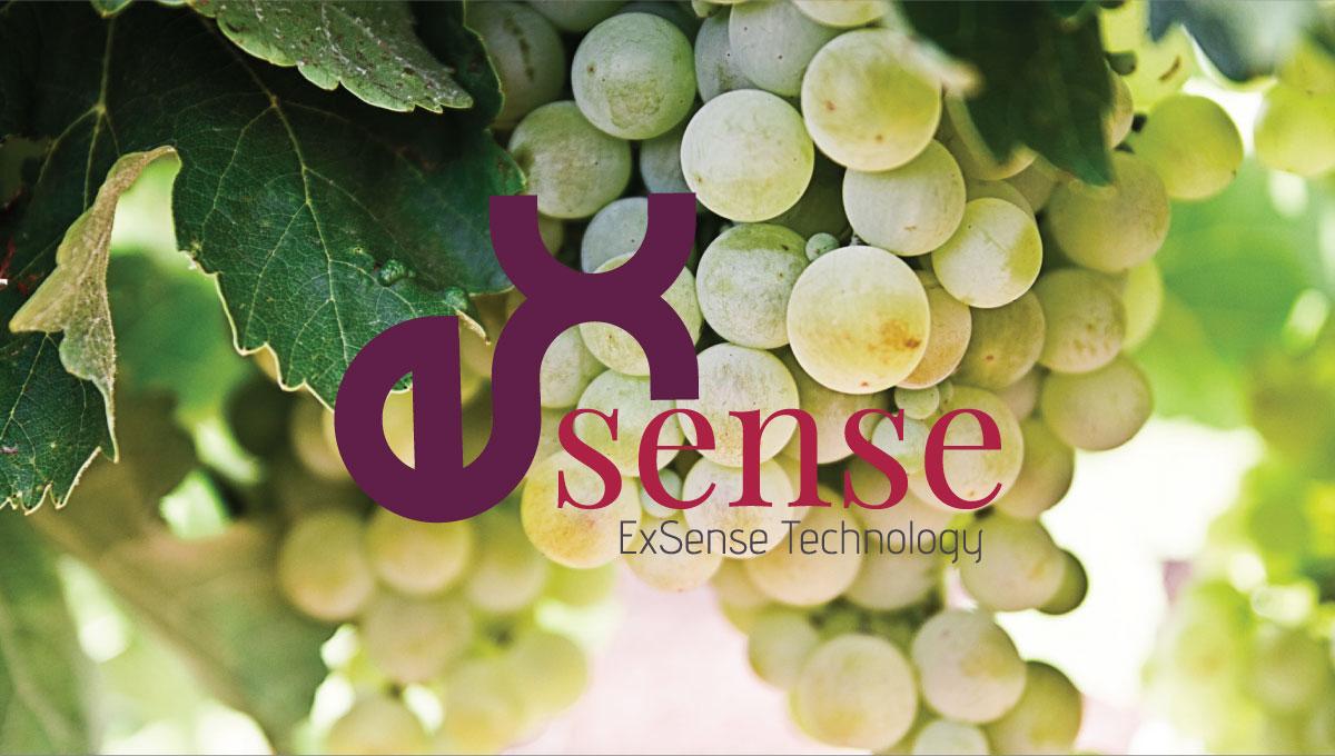 ExSense